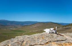 Paesaggio di Hilly Steppe, cielo blu Palella sulla priorità alta Immagine Stock