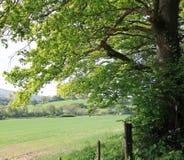 Paesaggio di Hmapshire, Regno Unito Fotografie Stock