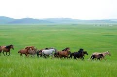 Paesaggio di Hulunbeir Fotografia Stock Libera da Diritti