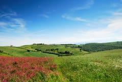 Paesaggio di inizio dell'estate Fotografia Stock