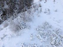 Paesaggio di inverno Immagine Stock Libera da Diritti
