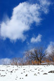 Paesaggio di inverno. Fotografie Stock Libere da Diritti