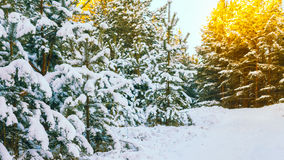 Paesaggio di inverno Immagini Stock Libere da Diritti