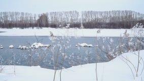 Paesaggio di inverno Accumuli il lago e nevichi rive, neve coperta piante 4k video d archivio