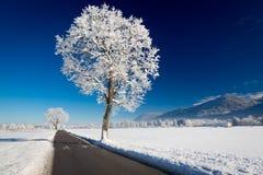 Paesaggio di inverno ad un giorno soleggiato Allgau, Germania Immagine Stock