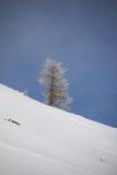 Paesaggio di inverno al Mt Dobratsch Fotografia Stock Libera da Diritti