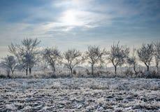 Paesaggio di inverno, alberi coperti di neve su un campo innevato Immagini Stock