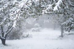 Paesaggio di inverno, alberi coperti di neve, giorno nebbioso fotografia stock