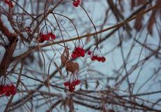 Paesaggio di inverno Alberi e cespugli con la stagione di freddo di brina un deposito cristallino bianco grigiastra del vapore ac Fotografia Stock Libera da Diritti