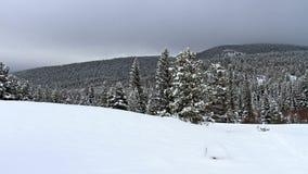 Paesaggio di inverno, alberi innevati Immagine Stock
