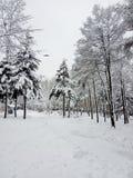Paesaggio di inverno Alberi di Natale e degli alberi coperti di neve immagini stock