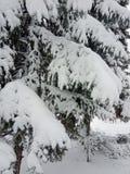 Paesaggio di inverno Alberi di Natale e degli alberi coperti di neve immagini stock libere da diritti