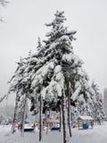 Paesaggio di inverno Alberi di Natale e degli alberi coperti di neve fotografia stock libera da diritti