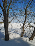 Paesaggio di inverno Alberi sull'orlo di un campo febbraio urals Immagine Stock