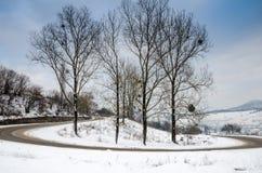 Paesaggio di inverno, alberi in un primo piano di fila, il gelo sull'erba Immagini Stock Libere da Diritti