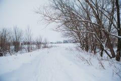 Paesaggio di inverno Albero della filiale del pino sotto neve Immagine Stock Libera da Diritti