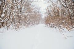 Paesaggio di inverno Albero della filiale del pino sotto neve Fotografia Stock Libera da Diritti