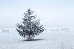 Paesaggio di inverno - albero gelido dell'abete rosso di inverno Immagini Stock Libere da Diritti