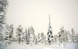 Inverno della foresta alla notte Fotografia Stock Libera da Diritti
