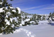 Paesaggio di inverno - alpi francesi Fotografie Stock Libere da Diritti