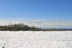 Paesaggio di inverno in Ardennes Immagine Stock