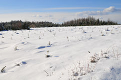 Paesaggio di inverno in Ardennes Immagini Stock Libere da Diritti