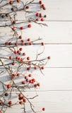 Paesaggio di inverno Bacche rosse del cratego su un fondo bianco Fotografia Stock