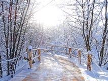 Paesaggio di inverno, bufera di neve in parco Immagine Stock