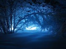 Paesaggio di inverno, bufera di neve in parco Immagini Stock