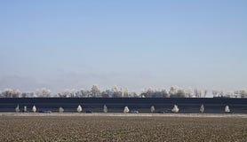Paesaggio di inverno, campi, strada principale ed alberi congelati Immagini Stock Libere da Diritti