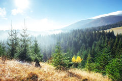 Paesaggio di inverno che emette luce dalla luce solare Scena drammatica Nebbia scenica Fotografia Stock Libera da Diritti