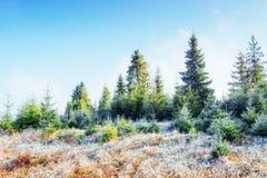 Paesaggio di inverno che emette luce dalla luce solare Scena drammatica Nebbia scenica Fotografia Stock