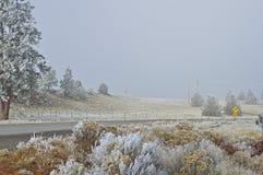 Paesaggio di inverno con gelo Immagine Stock