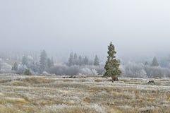 Paesaggio di inverno con gelo Immagine Stock Libera da Diritti