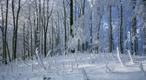 Paesaggio di inverno con gelo e gli alberi innevati e natura delle montagne carpatiche vicino a Bratislava, Slovacchia Fotografia Stock Libera da Diritti