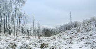 Paesaggio di inverno con gelo e gli alberi innevati e natura delle montagne carpatiche vicino a Pezinok, Slovacchia Fotografia Stock Libera da Diritti