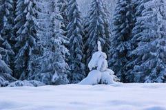 Paesaggio di inverno con gli abeti Immagini Stock Libere da Diritti