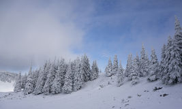 Paesaggio di inverno con gli abeti coperti in neve fotografia stock
