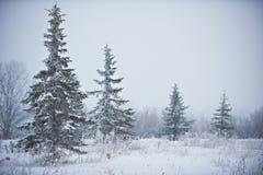 Paesaggio di inverno con gli abeti glassati Immagini Stock Libere da Diritti