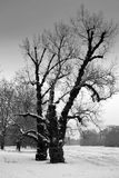 Paesaggio di inverno con gli alberi Fotografie Stock Libere da Diritti