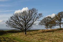 Paesaggio di inverno con gli alberi fotografia stock libera da diritti