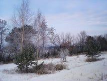 Paesaggio di inverno con gli alberi e cespuglio che cresce lungo il campo Fotografie Stock