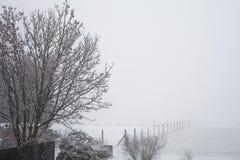 Paesaggio di inverno con gli alberi e la neve Fotografia Stock Libera da Diritti
