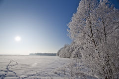 Paesaggio di inverno con gli alberi glassati e la brina Fotografia Stock