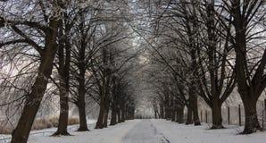Paesaggio di inverno con gli alberi hoarfrosted Paesaggio polacco di inverno fotografato al giorno gelido e nuvoloso Immagini Stock Libere da Diritti
