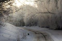 Paesaggio di inverno con gli alberi hoarfrosted Paesaggio polacco di inverno fotografato al giorno gelido e nuvoloso Fotografia Stock Libera da Diritti
