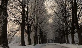 Paesaggio di inverno con gli alberi hoarfrosted Paesaggio polacco di inverno fotografato al giorno gelido e nuvoloso Immagine Stock Libera da Diritti