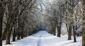 Paesaggio di inverno con gli alberi hoarfrosted Paesaggio polacco di inverno fotografato al giorno gelido e nuvoloso Fotografia Stock
