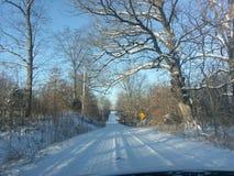 Paesaggio di inverno con gli alberi innevati Immagine Stock Libera da Diritti