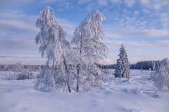 Terra di meraviglia di inverno con gli alberi Immagine Stock